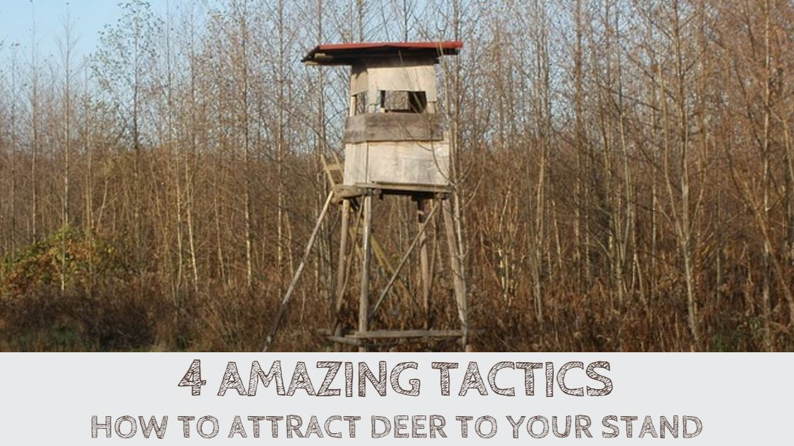 You are currently viewing How to Attract Deer to Your Stand (4 Amazing Tactics)