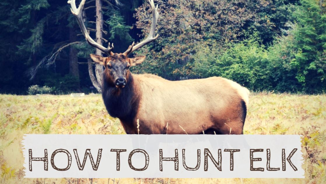 You are currently viewing How to Hunt Elk in the Wild (Step-By-Step Guide)