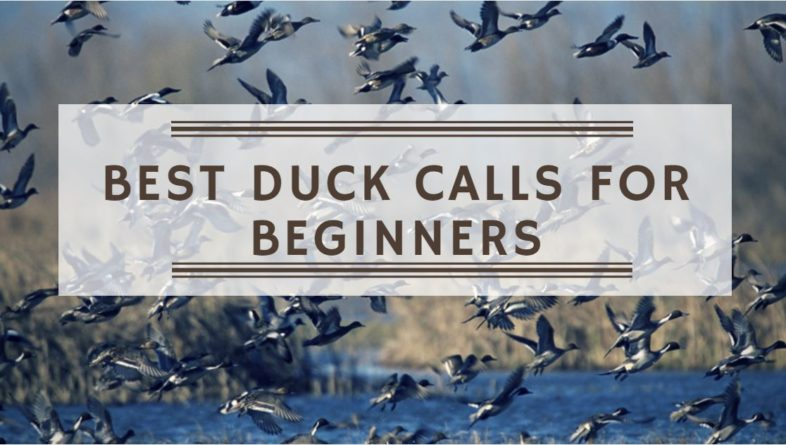You are currently viewing Best Duck Calls for Beginners