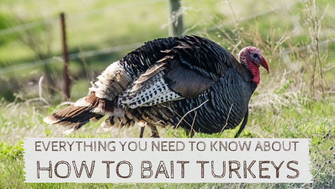 You are currently viewing How to Bait Turkeys Like A Pro (Using Tools, Decoys and Calls)