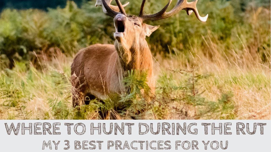 You are currently viewing Where to Hunt During the Rut? 3 Pro Tips for You