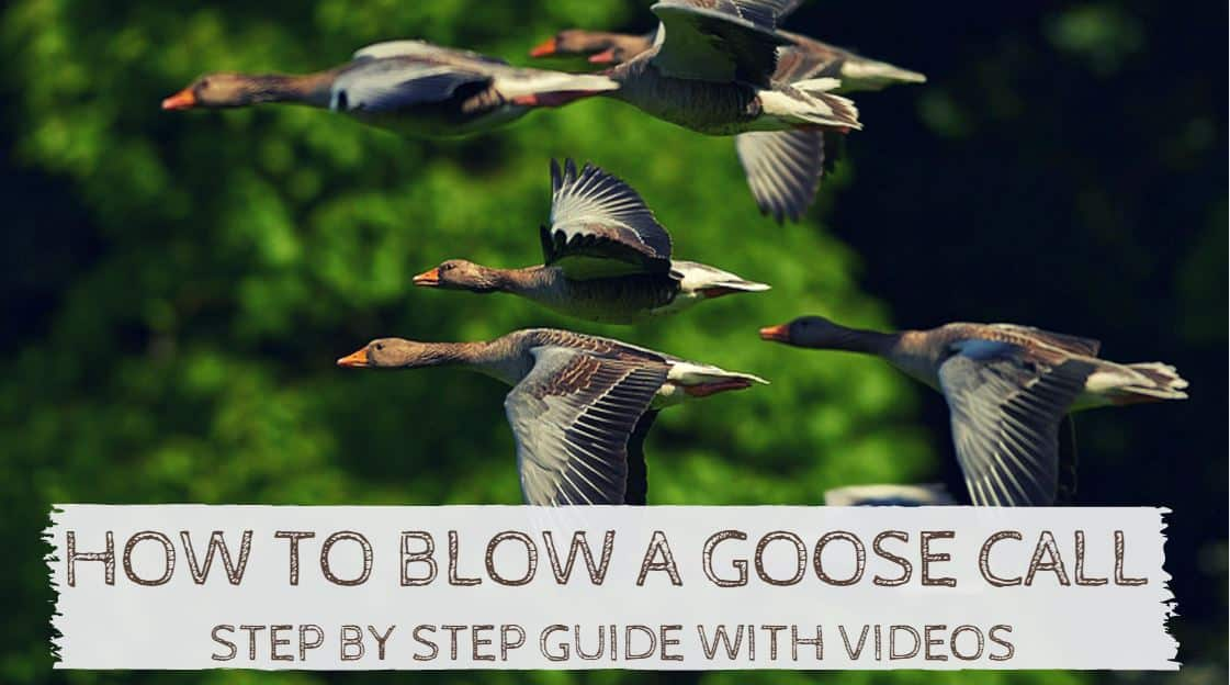You are currently viewing How to Blow a Goose Call – Step by Step Guide and Videos