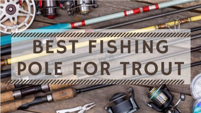 Best Fishing Pole For Trout