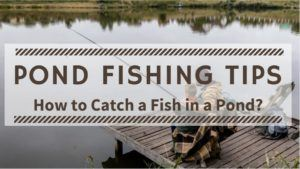 Read more about the article Pond Fishing Tips – How to Catch a Fish in a Pond