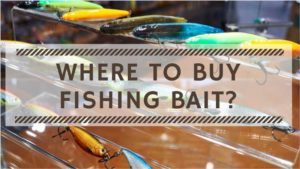 Read more about the article Where to Buy Fishing Bait? Guide to Buy Bait for Fishing