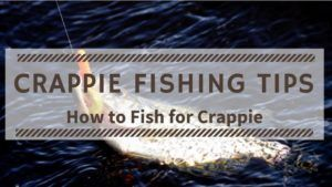 Read more about the article Crappie Fishing Tips for Beginners