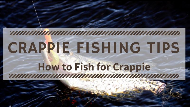 You are currently viewing Crappie Fishing Tips for Beginners
