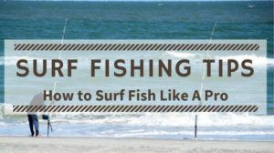 Read more about the article Surf Fishing Tips – How to Surf Fish Like A Pro