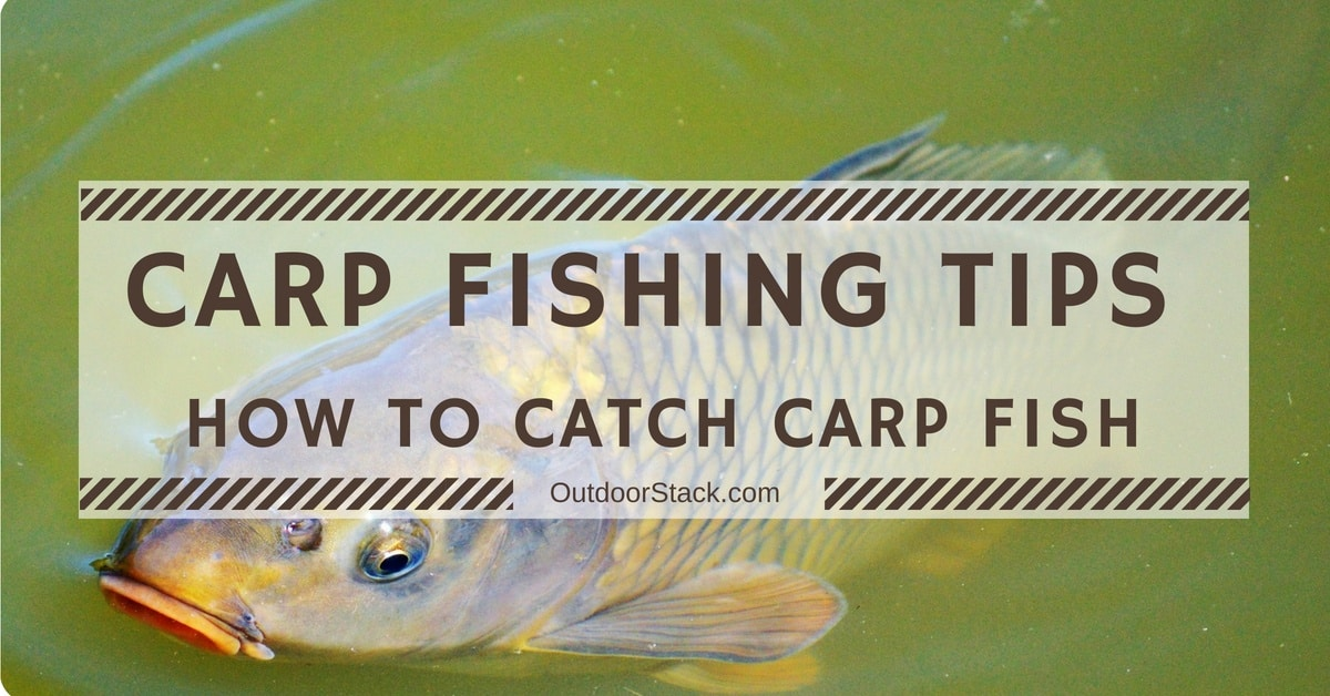 You are currently viewing Carp Fishing Tips for Beginners – How to Catch Carp Fish